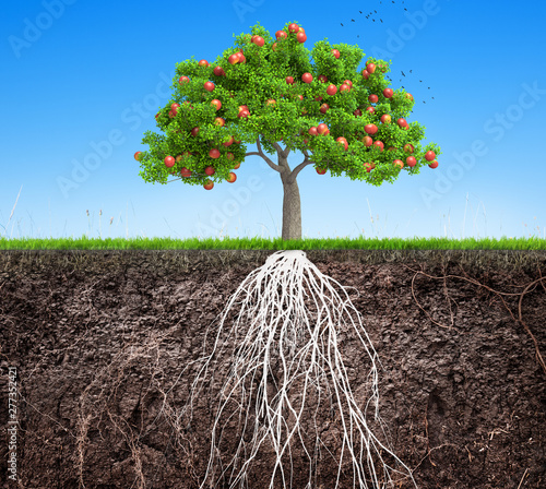 Valokuva  an apple tree and soil with roots and grass 3D illustration