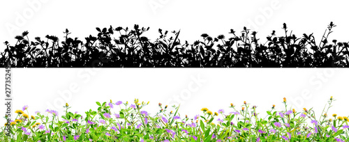 Foto op Plexiglas Weide, Moeras clover flowers and grass isolated on black background with alpha mask