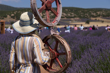 The Woman Wearing Colorful Dress And Wicker Hat In The Lavender Field.