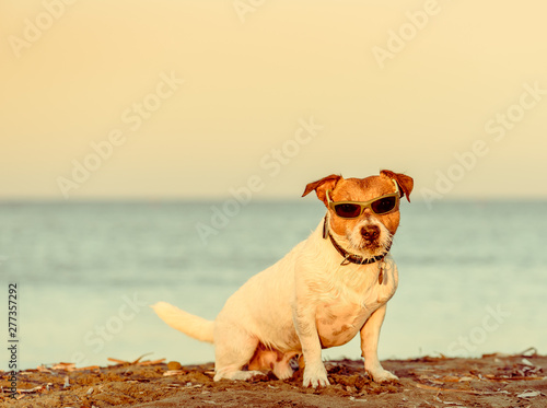 Poster Individuel Summer beach vacation concept with dog wearing sunglasses sitting on sand
