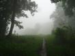 canvas print picture - baeume und wald im morgen nebel