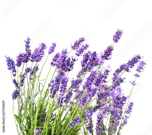Spoed Fotobehang Lavendel Fresh lavender flowers