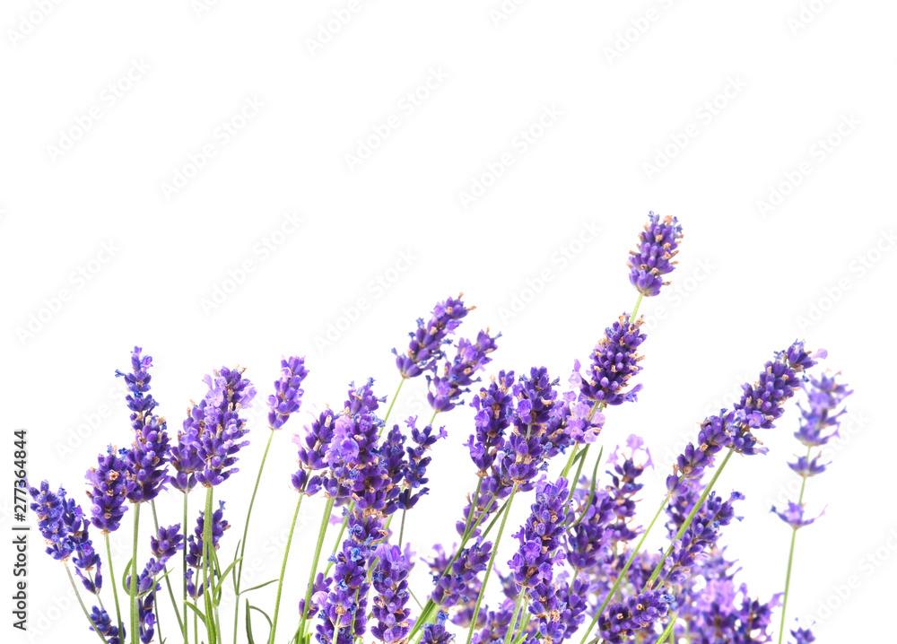 Fototapety, obrazy: Fresh lavender flowers