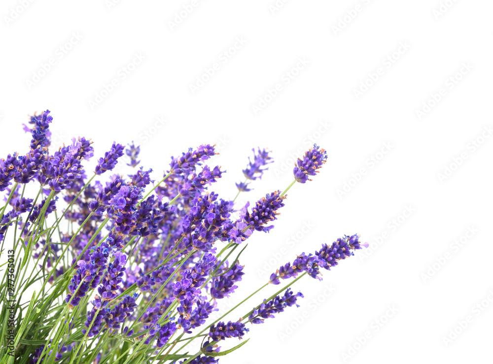 Fototapety, obrazy: bunch of lavender on white background