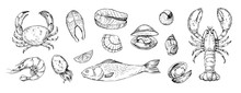 Set Of Seafood Objects. Hand Drawn Illustrations Converted To Vector