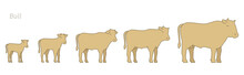 Bull Animal Farm. Stages Of Beefs Growth Set. Breeding Beef Production. Cattle Raising. Calf Grow Up Animation Progression. Flat Vector.