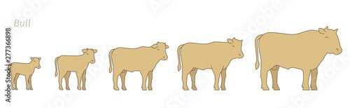 Tableau sur Toile Bull animal farm