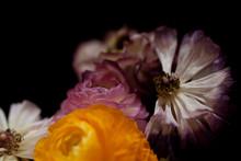 Blumenstrauss Getrocknet