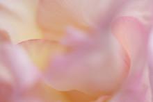 Blume Abstrakt Makro Rosa