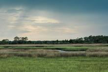 Florida Marsh Land Near The Co...