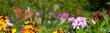 Schmetterling 581