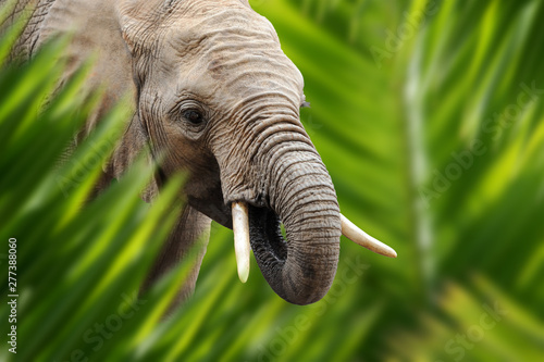 Elephant portrait in jungle Wallpaper Mural