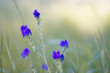 canvas print picture - macro de flores moradas