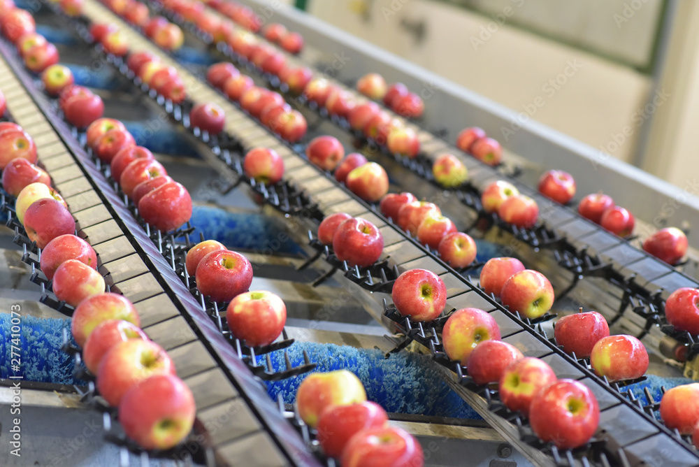 Fototapety, obrazy: transport of freshly harvested apples in a food factory for sale