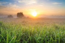 Summer Landscape With Sunrise And Meadow