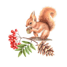Red Squirrel On A Tree With A ...