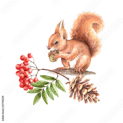 Fotografía  red squirrel on a tree with a branch of a mountain ash and a cone