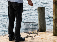Man Throwing A Crab Trap Into ...