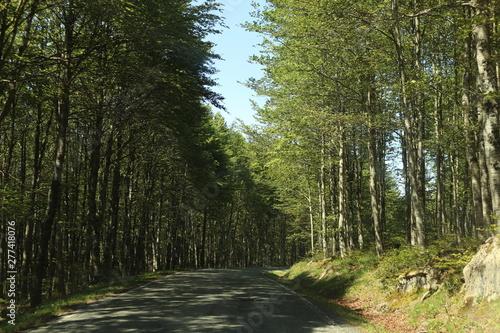 Foto op Canvas Weg in bos Monte Nieve Árbol Roca Cordillera escalada