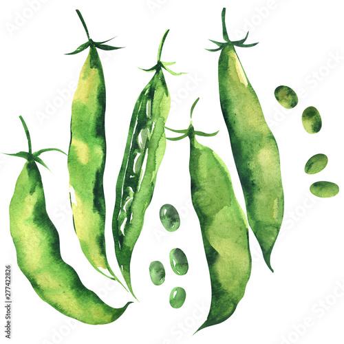 Stampa su Tela Fresh sweet green pea pod, peas, young sugar snap peas, isolated, hand drawn wat