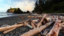 Driftwood On The Shore Of The Olympic Peninsula, Washington State