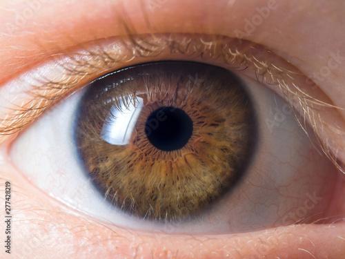 Poster Iris Human eye detail