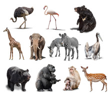 Big Set Of Wild Animals Isolat...