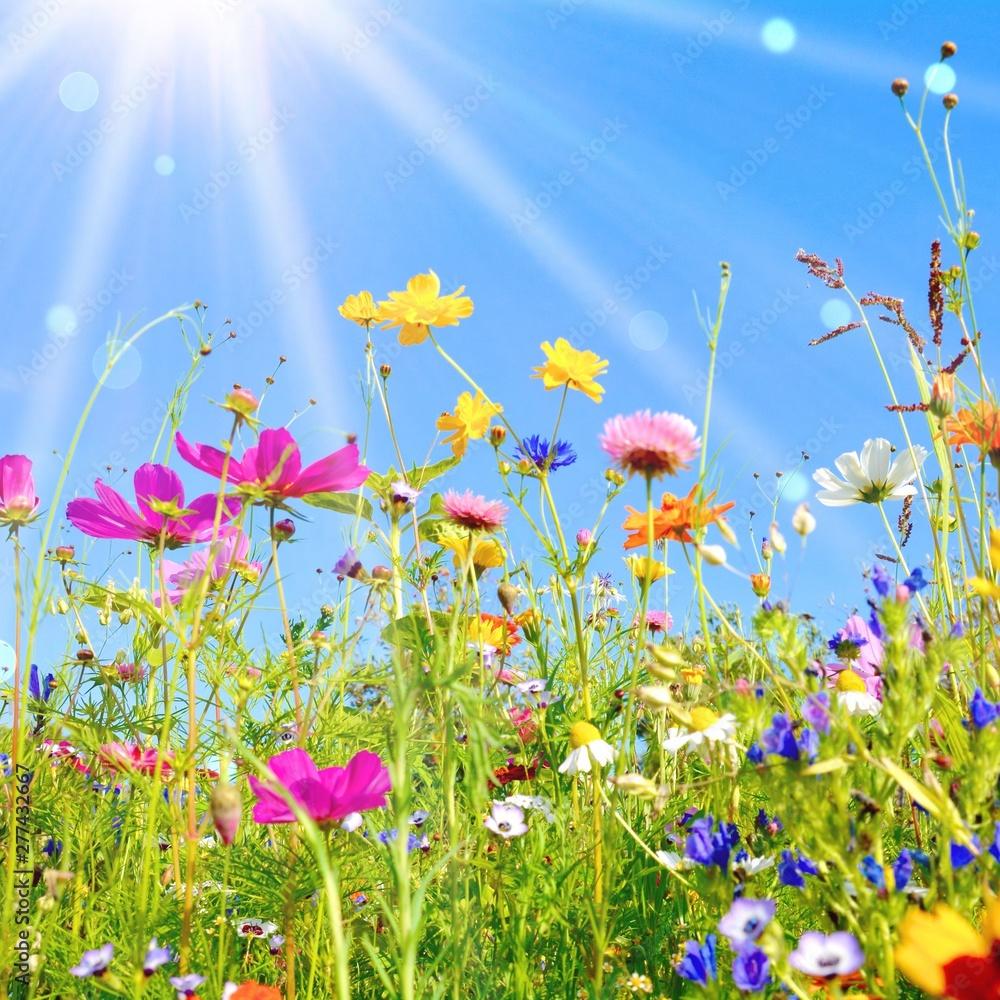 Fototapeta bunte Blumenwiese - Grußkarte Wildblumen Wiese