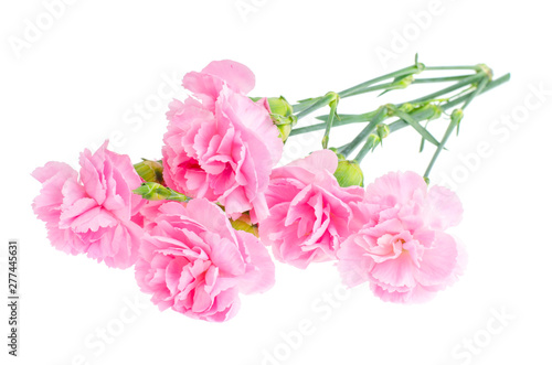 Tuinposter Azalea Several fresh pink carnations. Photo