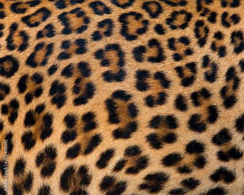 Canvas Prints Leopard Tiger