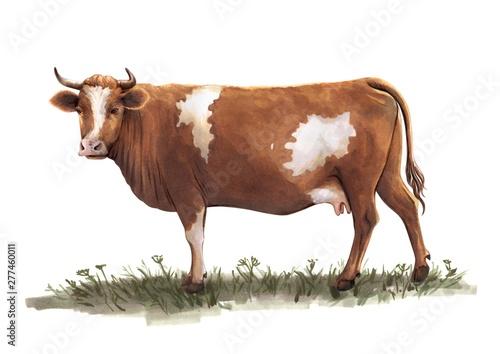 sketch of cow drawn by hand. livestock. cattle. animal grazing Billede på lærred