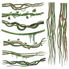 Tropical Liana Branches, Stems, Vines Set, Jungle Plants Decorative Elements, Rainforest Flora Vector Illustration
