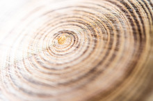 Annual Ring Of Sliced Tree Trunk