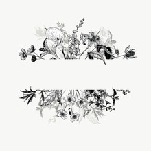 Horizontal Hand Drawn Borders With Wild Flowers And Herbs. Black And White Arrangement In Vintage Style.