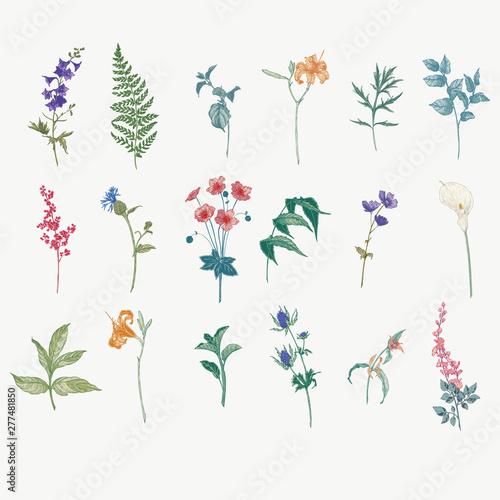Fotografia Vintage wild flower illustration set
