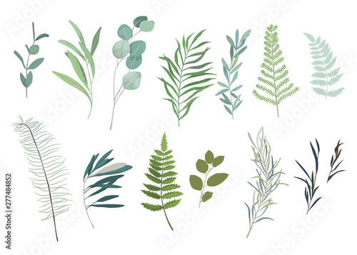 Foto  Floral greenery set with eucalyptus branch. Vector illustration