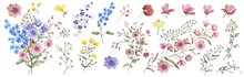Field Flowers.  Watercolor Illustration. Botanical Collection Of Wild And Garden Plants. Set: Different Wild Flowers, Pink, Blue, Yellow, Leaves, Bouquets,branches,  Herbs And Other Natural Elements.