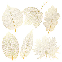 Set Gold Autumn Leaves On White. Vector Illustration.