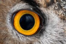 Eagle Owl Eye Close-up, Eye Of...