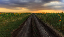Dirt Road Leading Through The ...