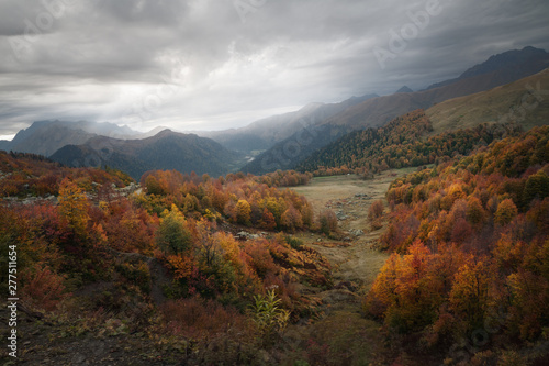 Poster de jardin Parc Naturel colorful autumn forest in the mountains on a cloudy day