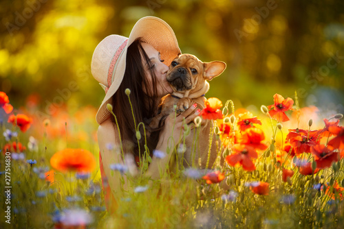 fototapeta na ścianę young girl and her french bulldog puppy in a field with red poppies