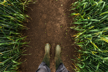 Farmer in rubber boots walking through muddy wheat field