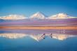 Leinwandbild Motiv Snowy Licancabur volcano in Andes montains reflecting in the wate of Laguna Chaxa with Andean flamingos, Atacama salar, Chile