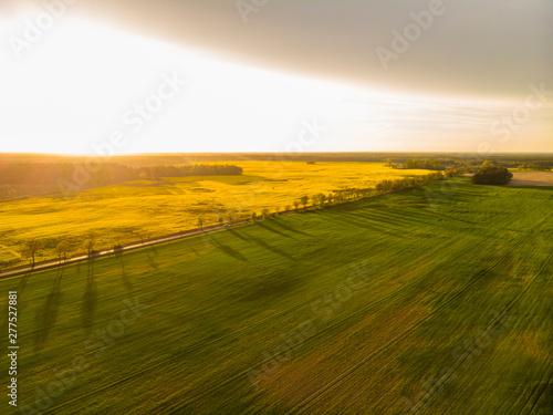 Fototapeta Pole pola rzepak rzepaku kwitnie wieś farma przemysł rolnictwo wiosna maj obraz