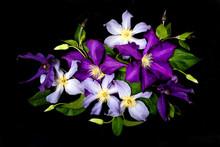 Beautiful Purple Flowers On Bl...