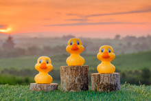 Three Ranking Winner Yellow Ducks Proudly Standing On The Winning Podium With Beautiful Sunrise As Background. Concept Of Competition .