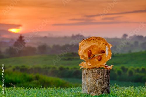 Pinturas sobre lienzo  Rempeyek on wooden block during beautiful sunrise