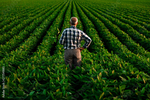 Foto Rear view of senior farmer standing in soybean field examining crop at sunset