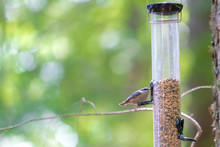 Tiny Bird On A Feeder In A Forest